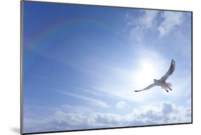 Seagull-ICHIRO-Mounted Premium Photographic Print