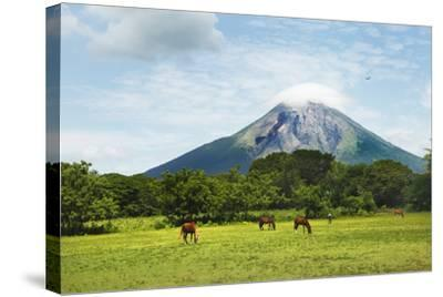 Concepcion Volcano with Grazing Horses-Paul Taylor-Stretched Canvas Print