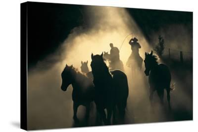 Australian Stock Horses Being Mustered at Stockyard Creek, Victoria, Australia-Peter Walton Photography-Stretched Canvas Print