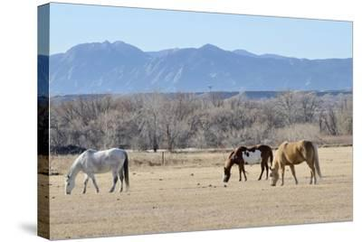 Horses Grazing-RiverNorthPhotography-Stretched Canvas Print