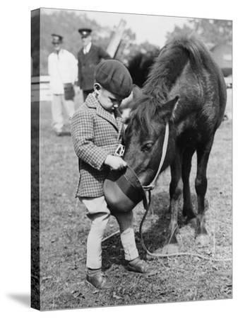 Feeding the Pony-Fox Photos-Stretched Canvas Print