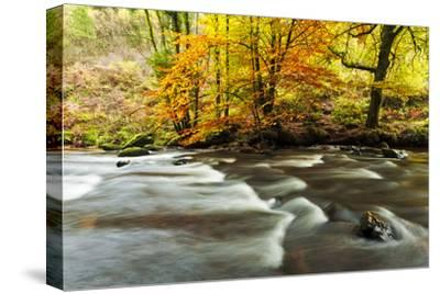 The River Teign and Whiddon Wood in Autumn.-Alex Hare-Stretched Canvas Print