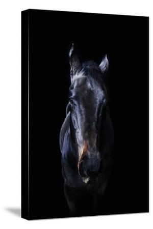 Horse-Yusuke Murata-Stretched Canvas Print