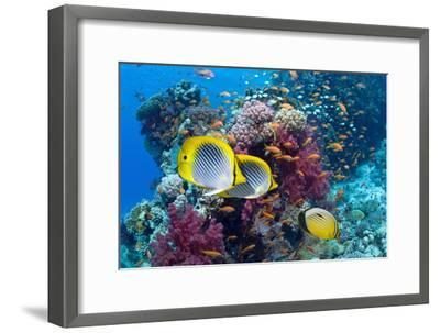 Coral Reef Scenery with Fish-Georgette Douwma-Framed Premium Photographic Print