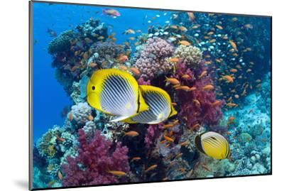 Coral Reef Scenery with Fish-Georgette Douwma-Mounted Premium Photographic Print