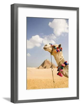 Camel in Desert with Pyramids Background-Grant Faint-Framed Premium Photographic Print