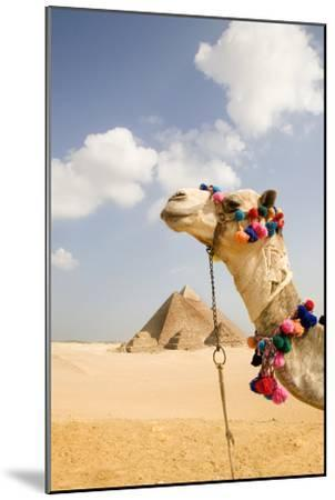 Camel in Desert with Pyramids Background-Grant Faint-Mounted Premium Photographic Print