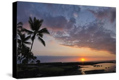 Panorama Sunset with Palms, Keauhou, Hawaii-Alvis Upitis-Stretched Canvas Print
