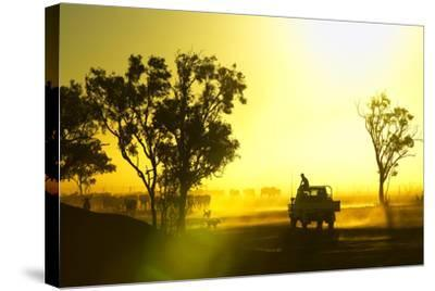Silhouetted Cattle Muster at Sunset, Armraynald Station.-Johnny Haglund-Stretched Canvas Print