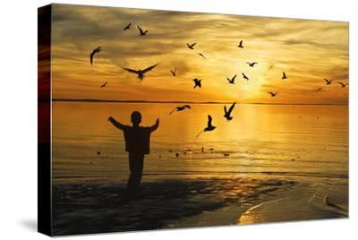 Flying Seagull with Silhouette-KAM-Stretched Canvas Print