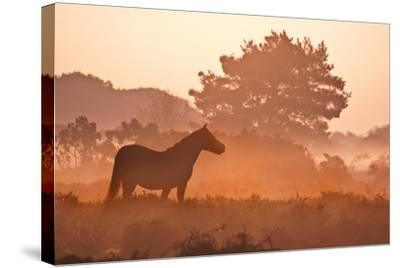 New Forest Pony in Mist at Dawn.-Julie Mitchell/Southdowns Photographics-Stretched Canvas Print