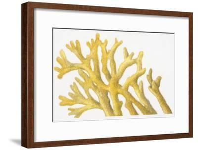 Illustration of Yellow Coral-Dorling Kindersley-Framed Premium Photographic Print