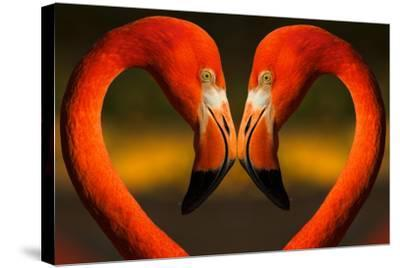 Flamingos with Heart Shaped Necks-VAILLANCOURT PHOTOGRAPHY-Stretched Canvas Print
