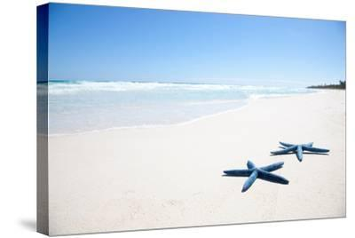 Two Blue Starfish on Tropical Beach-Lulu-Stretched Canvas Print