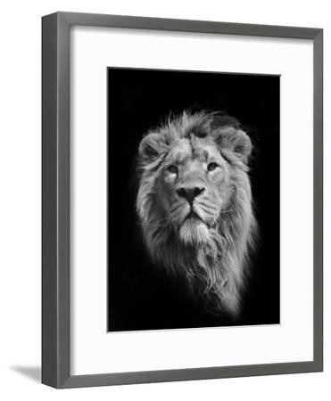 The King (Asiatic Lion)-Stephen Bridson Photography-Framed Premium Photographic Print