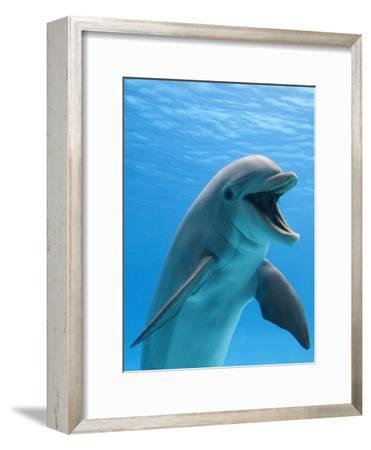 Bottlenose Dolphin Underwater-Augusto Leandro Stanzani-Framed Premium Photographic Print