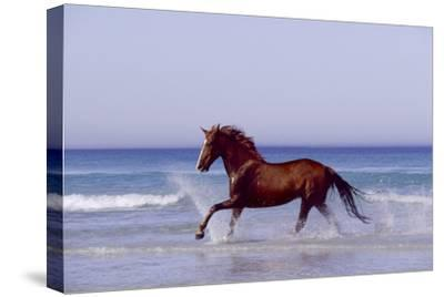 Horse Trotting Through Waves in Sea--Stretched Canvas Print