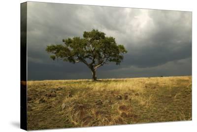 Africa Savannah--Stretched Canvas Print