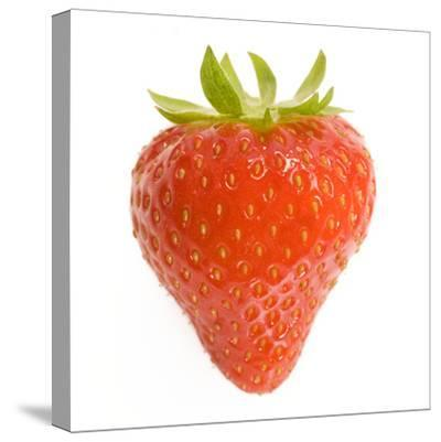 Strawberries Single in Studio--Stretched Canvas Print