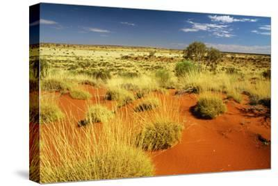 Little Sandy Desert Western Australia--Stretched Canvas Print