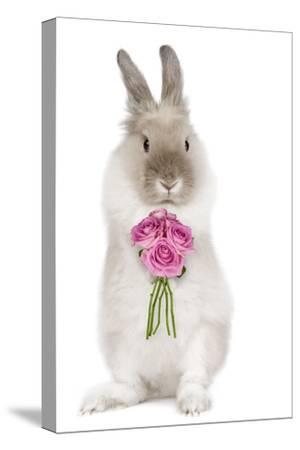 Dwarf Lion-Head Rabbit on Hind Legs Holding Flowers--Stretched Canvas Print