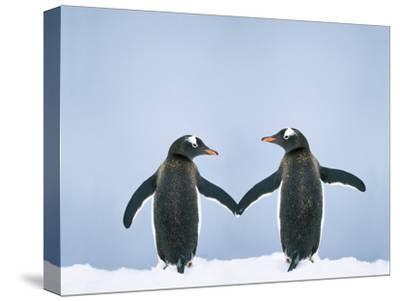 Gentoo Penguin Pair 'Holding Hands'--Stretched Canvas Print