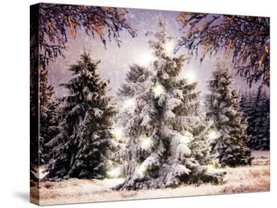 Snow Conifers in Winter Landscape with Christmas Lights--Stretched Canvas Print
