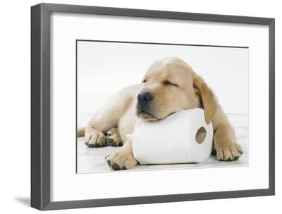 Yellow Labrador Puppy Asleep on Toilet Roll, 9 Weeks--Framed Premium Photographic Print