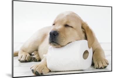 Yellow Labrador Puppy Asleep on Toilet Roll, 9 Weeks--Mounted Premium Photographic Print