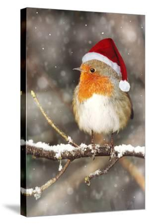 Robin in Falling Snow Wearing Christmas Hat--Stretched Canvas Print