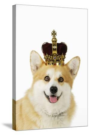 Welsh Corgi Dog Wearing Crown and Pearls--Stretched Canvas Print