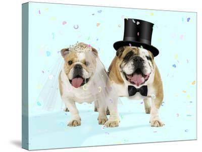 Bulldogs Male and Female--Stretched Canvas Print