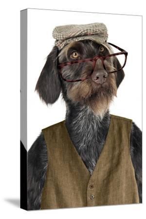 German Wire-Haired Pointer with Hat Glasses--Stretched Canvas Print