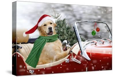 Golden Retriever Driving Car Collecting Christmas Tree--Stretched Canvas Print