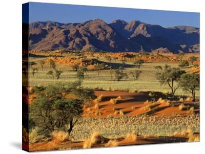 Namib Rand View over Red Dunes and Savanna--Stretched Canvas Print