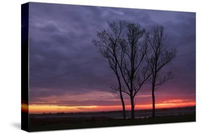 Sunrise Trees at Ogunquit, Maine Coast-Vincent James-Stretched Canvas Print
