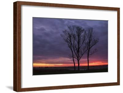 Sunrise Trees at Ogunquit, Maine Coast-Vincent James-Framed Photographic Print