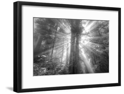 God Beams and The Redwoods (Black and White)-Vincent James-Framed Photographic Print