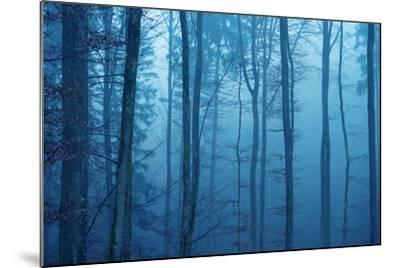 Wrapped in Blue-Philippe Sainte-Laudy-Mounted Photographic Print
