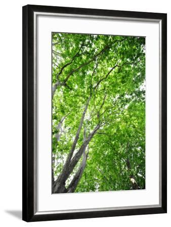 Green on Air-Philippe Sainte-Laudy-Framed Photographic Print