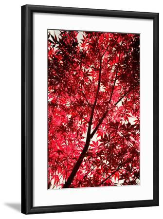Red on Air-Philippe Sainte-Laudy-Framed Photographic Print