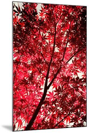 Red on Air-Philippe Sainte-Laudy-Mounted Photographic Print