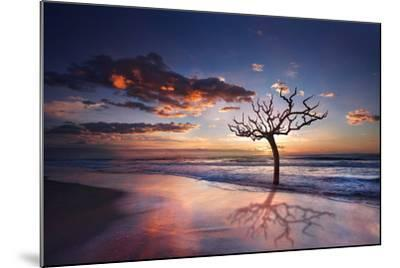 Tree in the Sea-Marco Carmassi-Mounted Photographic Print
