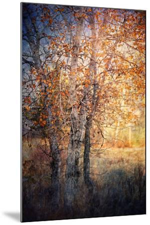Kootenay Fall 2-Ursula Abresch-Mounted Photographic Print