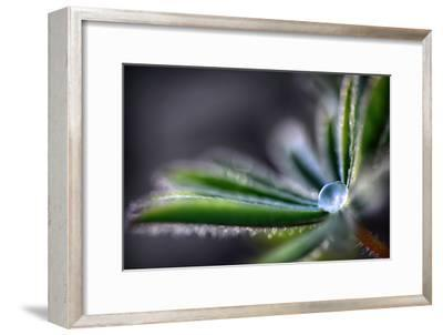 Rain Drop on a Lupine Leaf-Ursula Abresch-Framed Photographic Print