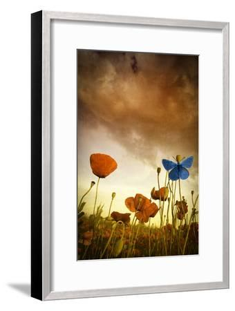 Poppies Dream-Marco Carmassi-Framed Photographic Print