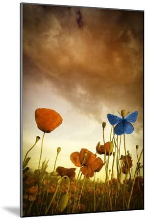 Poppies Dream-Marco Carmassi-Mounted Photographic Print
