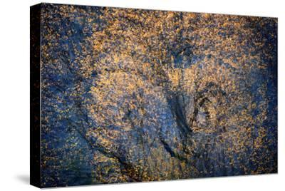 The Trees Have Eyes-Ursula Abresch-Stretched Canvas Print