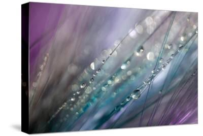 Dew 2-Ursula Abresch-Stretched Canvas Print