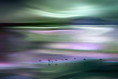 Migrations - Green Sky-Ursula Abresch-Photographic Print